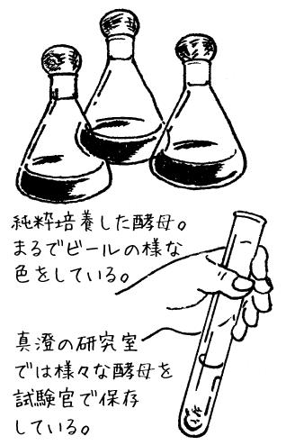 純粋培養した酵母/まるでビールの様な色をしている。真澄の研究室では様々な酵母を試験管で保存している。